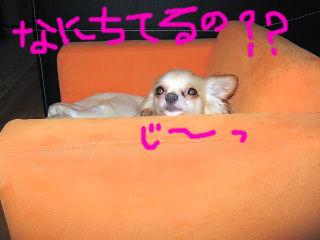 20060520175254.jpg