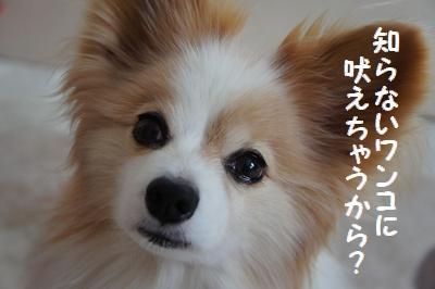 029_20111226170250.jpg