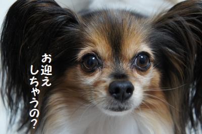 031_20120128154719.jpg