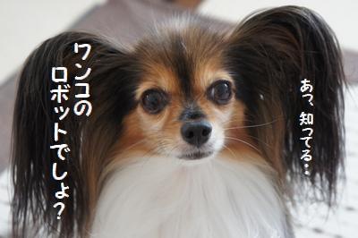 033_20110928134442.jpg