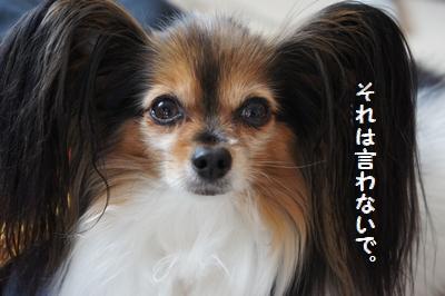 063_20120207232200.jpg