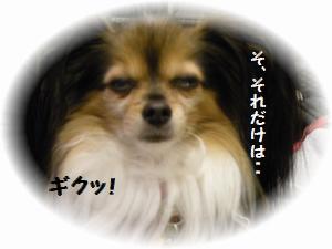 093_20120120202241.jpg