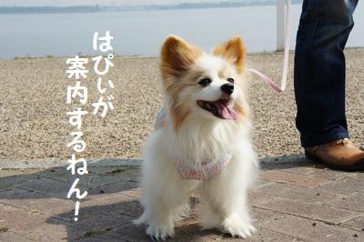 101_20111023181245.jpg