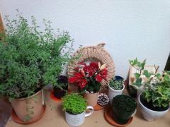 我が家の植物さんたち