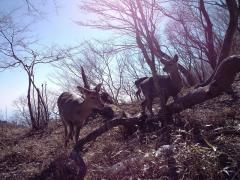鹿の群に遭遇