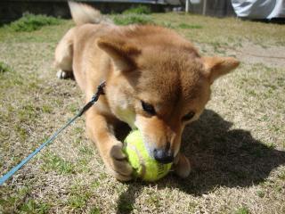 テニス好き