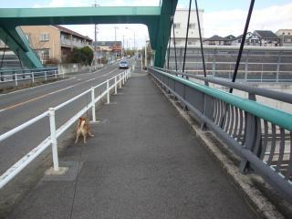 お気に入りの橋