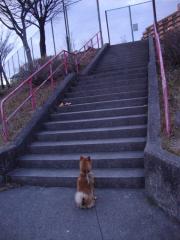 登りたいハル