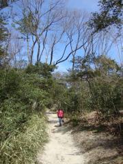ひんやり森林