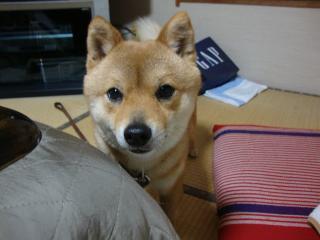 天ぷら…。