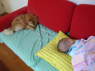 息子たち寝る