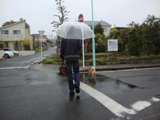 雨の散歩①