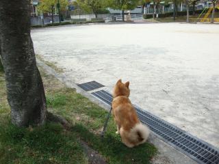 公園の隅っこ