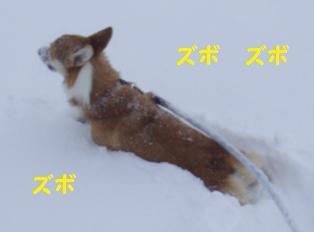 Rin080103-71.jpg