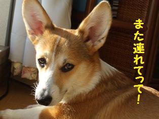 Rin080106-11.jpg