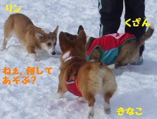 Rin080112-820.jpg