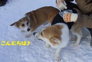 Rin080112-901.jpg