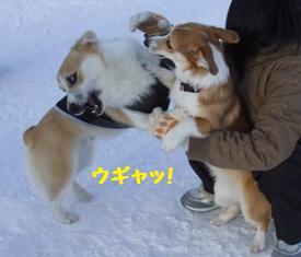 Rin080112-902.jpg