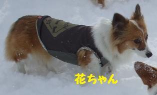 Rin080126-0.jpg