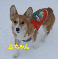 Rin080126-01.jpg