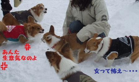 Rin080126-13.jpg