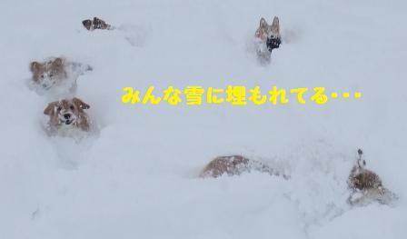 Rin080126-15.jpg