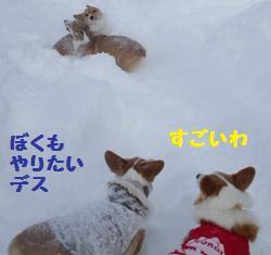 Rin080126-5.jpg