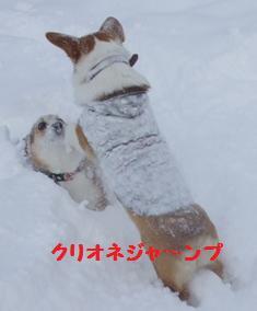 Rin080126-7.jpg