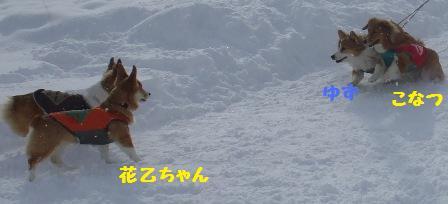 Rin080126-9.jpg