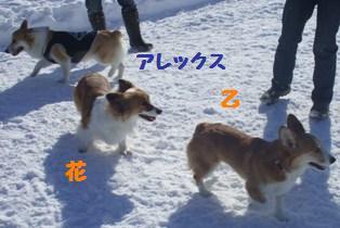 Rin080210-105.jpg