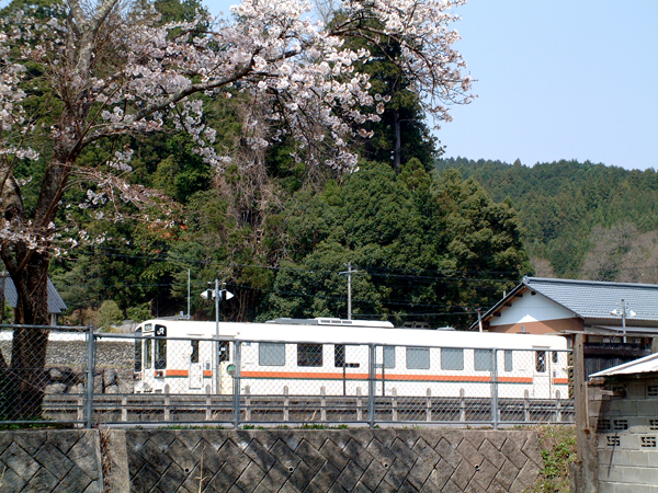 08・桜とキハ11