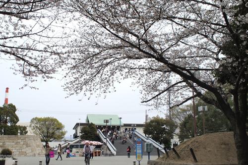 01・大阪城公園へお花見