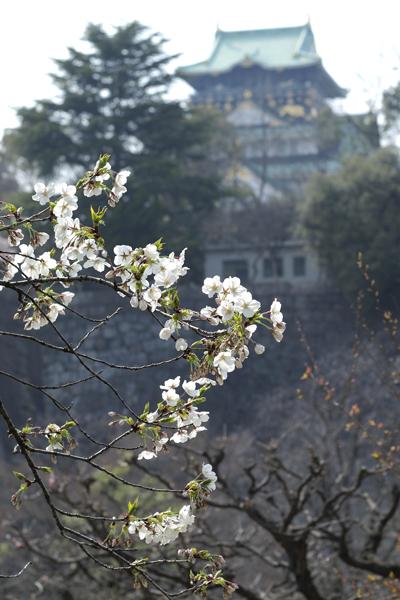 城と桜:普通?