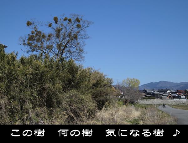 08・気になる樹