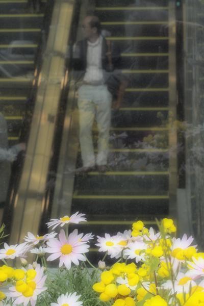 11・花とおじさん