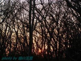 ちいさな森の夕暮れ