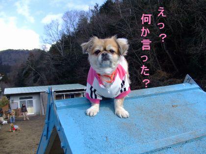 2008_02070016.jpg