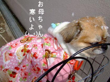 2008_02130029.jpg