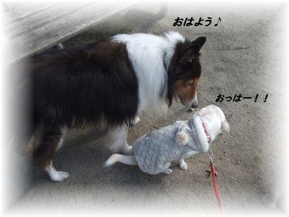 2011_11240008.jpg