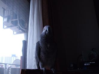 窓辺のクロエ