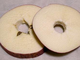 フリーズドライのふじリンゴ