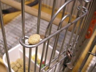 餌入れゲートに置かれたペレット
