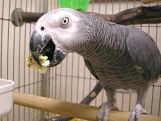ポップコーンを食べるジャンリュック
