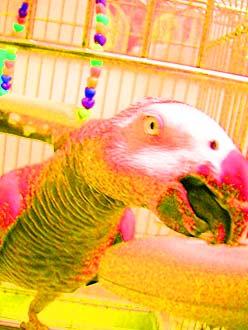 恐竜アレンジJean-Luc