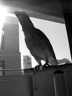 窓辺のJean-Lucモノクロ