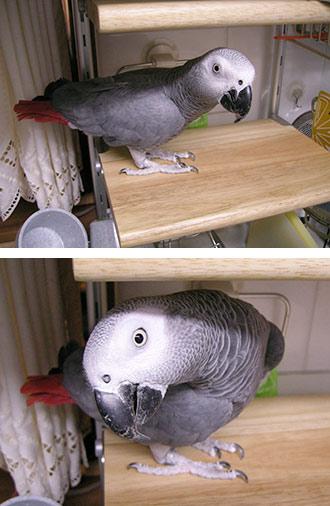 台所棚のJean-Luc