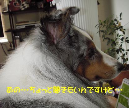 IMGP6961.jpg