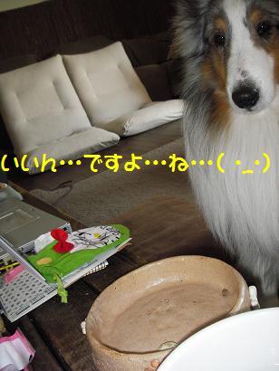IMGP6968zxc.jpg