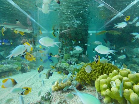 44th_Sony_Aquarium_01