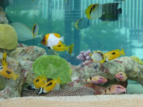 44th_Sony_Aquarium_02